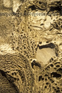 Golden sunlight and honeycomb weathering at Larrabee State Park, Washington. The photo is about 1 meter across.