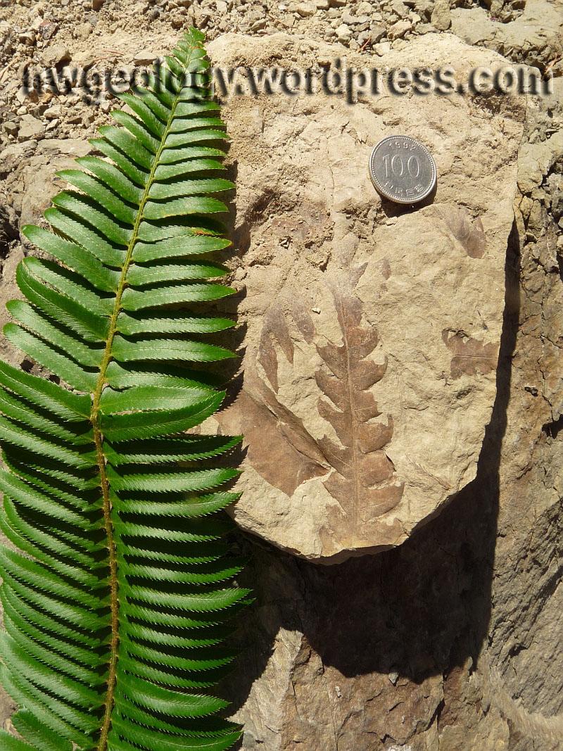 Car Won T Start >> The Racehorse landslide fossil fields | Northwest Geology Field Trips