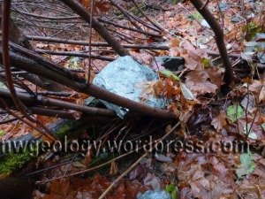 This greenschist boulder lying on the alder tree shows that debris continues to come off the valley walls.