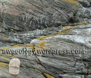 Quartz veins crosscutting the sheared sandstone at Iceberg Point. As always, click to enlarge the photo.