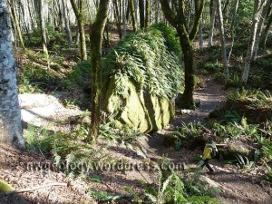 One of many large fern draped fallen blocks.