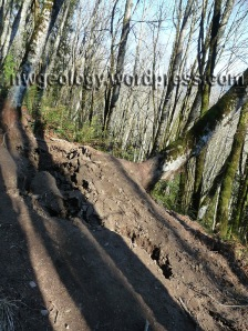Toppling alder erodes trail beyond the Tafoni Cliffs.
