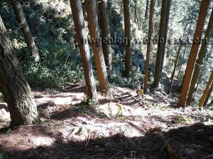 The first part of several stairways on the Rock Trail.