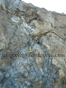 Gabbro at Stop 1. Note the pale vertical dikes near the yellow hammer. Click any image to enlarge.