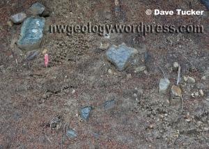 Lahar deposit detail at Stop 3 in Vignette 9 of Geology Underfoot in Western Washington.